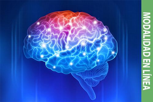 Neurodidáctica